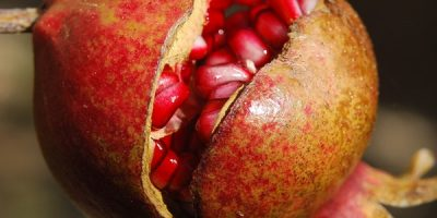 Pomegranate fruit with seeds